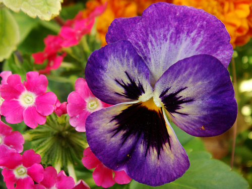 Pretty Exotic Flower Pictures, Photos, and Images for Facebook.
