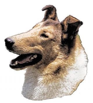 What Shape Is Your Dog's Ear?.