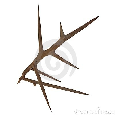 Thorn Stock Images.