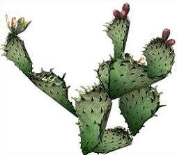 Free Prickly Pear Cactus Clipart.
