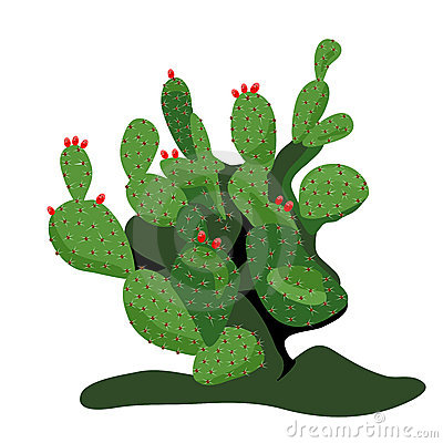 Prickly Pear Cactus Stock Illustrations.