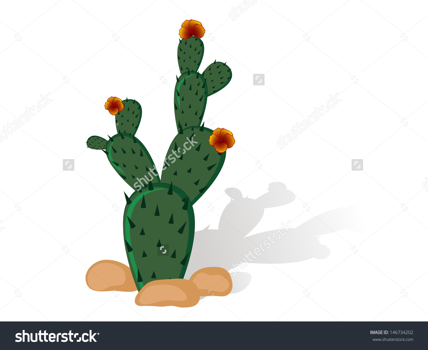 Prickly Pear Cactus Red Blooms Stock Vector 146734202.