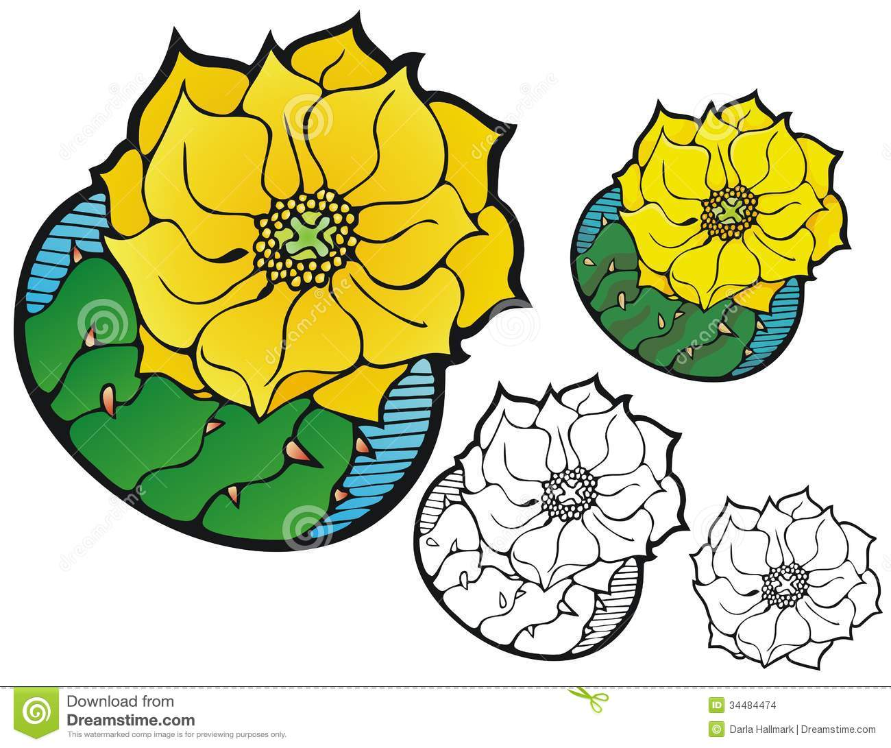 Prickly Pear Cactus Flower Stock Images.