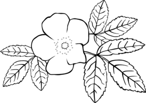 Prickly Wild Rose Coloring Page Clip Art at Clker.com.