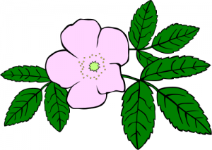 Wild Rose Clip Art Download.