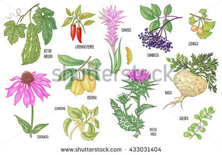 Thistle Stock Photos, Royalty.