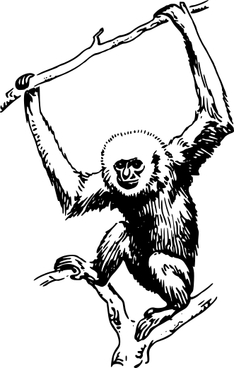 Primate clipart.