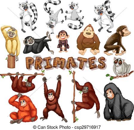 Vector Clip Art of Different kind of primates illustration.
