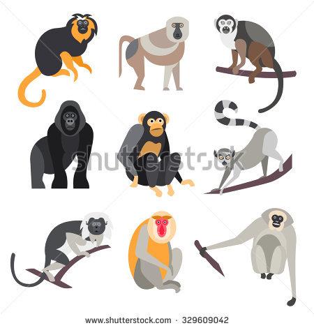 Primates Stock Photos, Royalty.