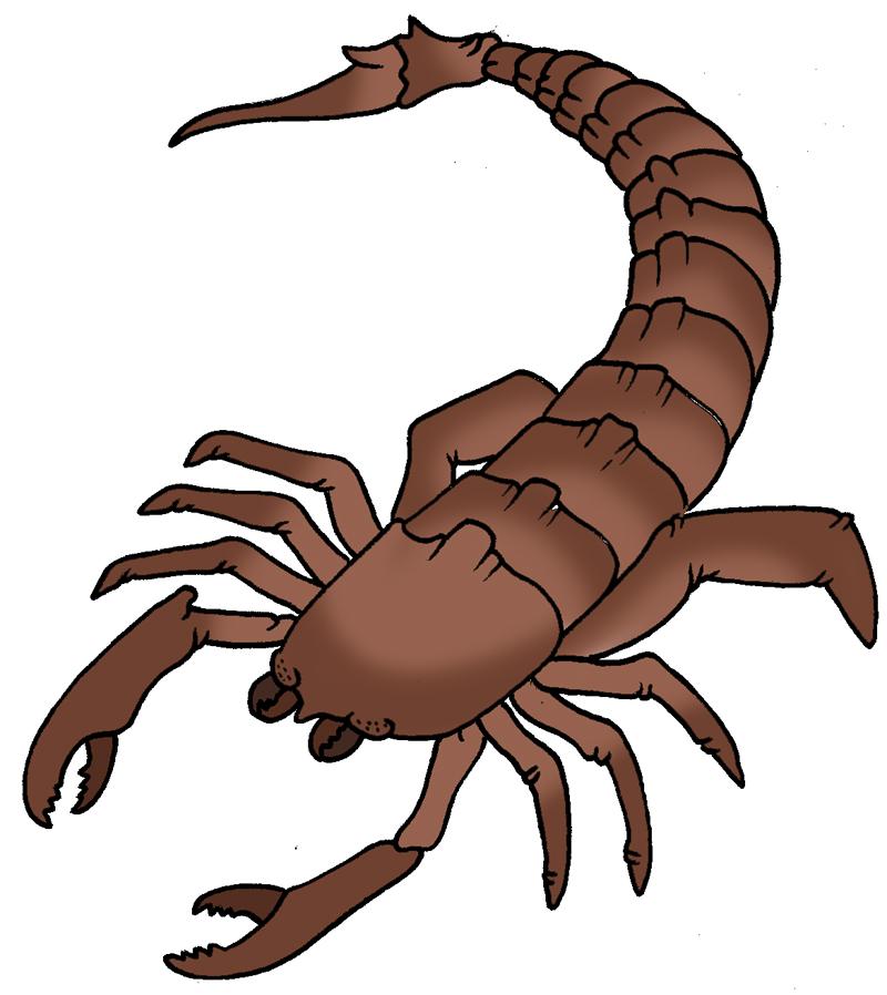 Scorpion Clipart & Scorpion Clip Art Images.
