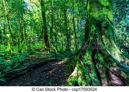 Stock Photo of Green forest in primeval forest and big trees.