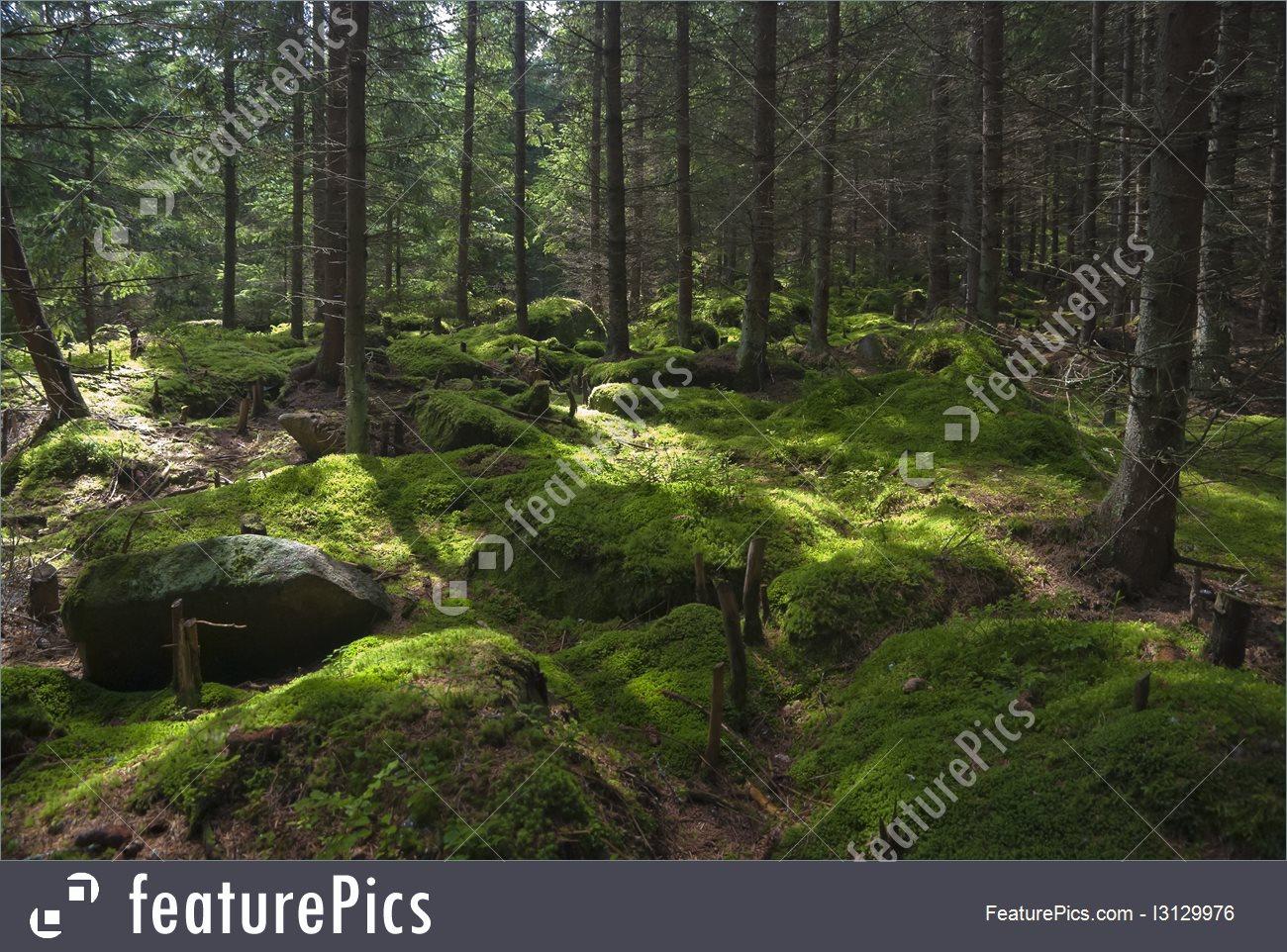 Nature Landscapes: The Primeval Forest.