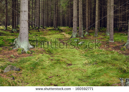 Primeval Forest Mossed Groundhdr Stock Photo 141400270.