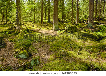 Primeval Forest Stock Photos, Royalty.