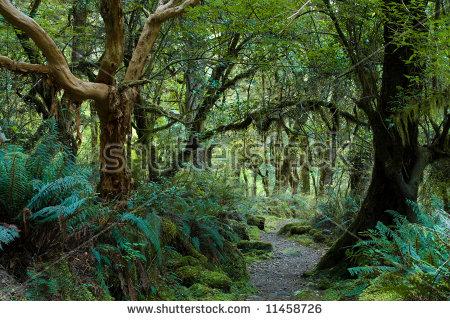 Primeval Forest On Kepler Track Fiordland Stock Photo 11458726.