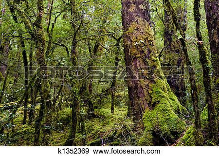 Stock Photograph of primeval forest k1352369.