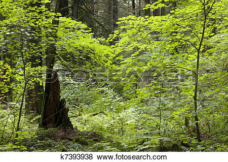 Pictures of Primeval forest k7393938.