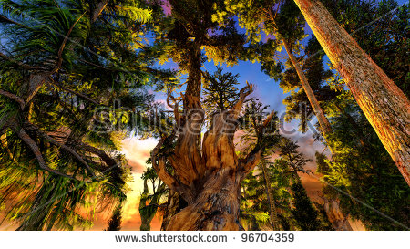 Primeval Forest Stock Images, Royalty.