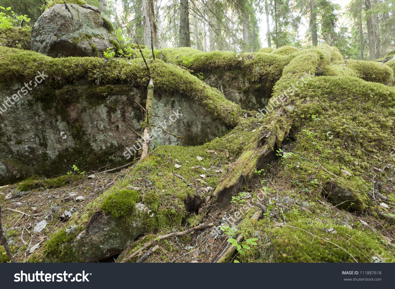 Untouched Primeval Forest Moss On Rocks Stock Photo 111887618.