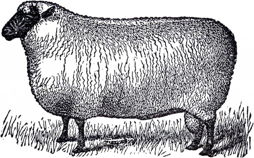 Primitive Vintage Sheep Image.