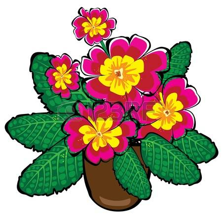 900 Primrose Stock Vector Illustration And Royalty Free Primrose.