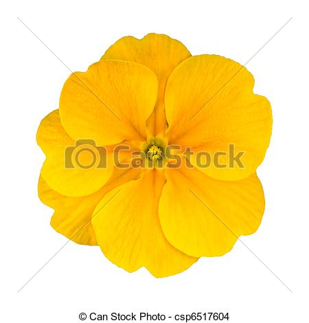Primrose Stock Photos and Images. 6,319 Primrose pictures and.