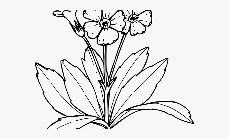 Daffodil Clipart Primrose Flower.