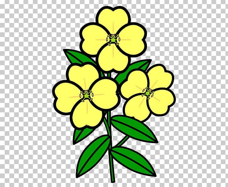Floral Design White Evening Primrose Flower Plant PNG.