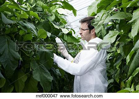 Picture of Germany, Bavaria, Munich, Scientist in greenhouse.