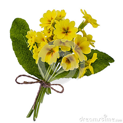 Bunch Primroses Stock Photos, Images, & Pictures.