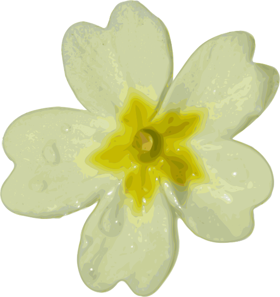 White Primula Clip Art at Clker.com.