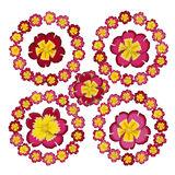 Primulaceae Stock Illustrations.