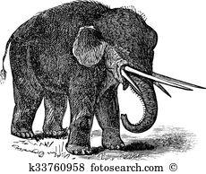 Proboscidea Clipart and Illustration. 22 proboscidea clip art.