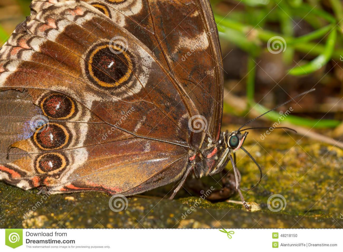 Butterfly proboscis clipart.