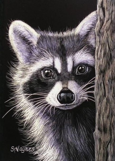 1000+ images about Raccoons on Pinterest.