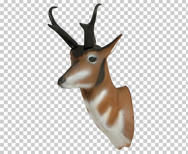Springbok Pronghorn Antelope Impala Deer PNG, Clipart.