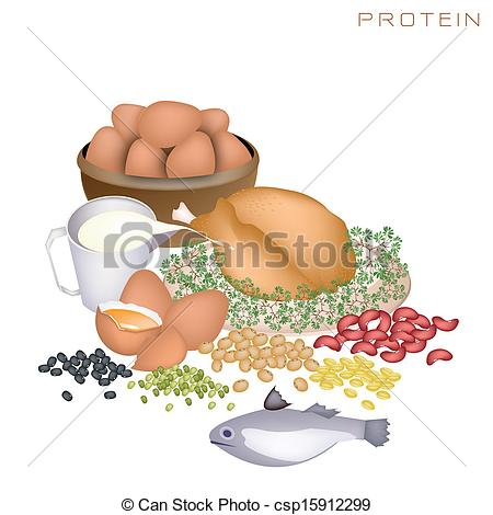 Clip Art for Protein.