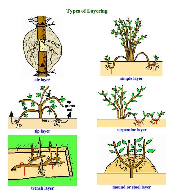 1000+ images about Propagation on Pinterest.