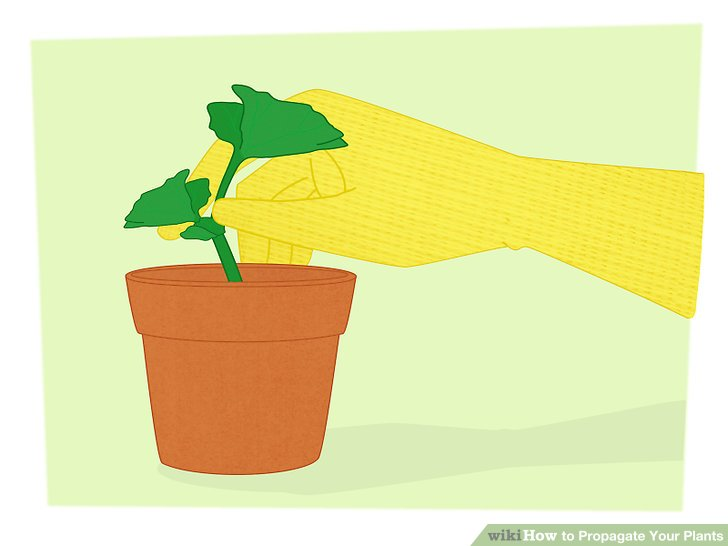 4 Ways to Propagate Your Plants.