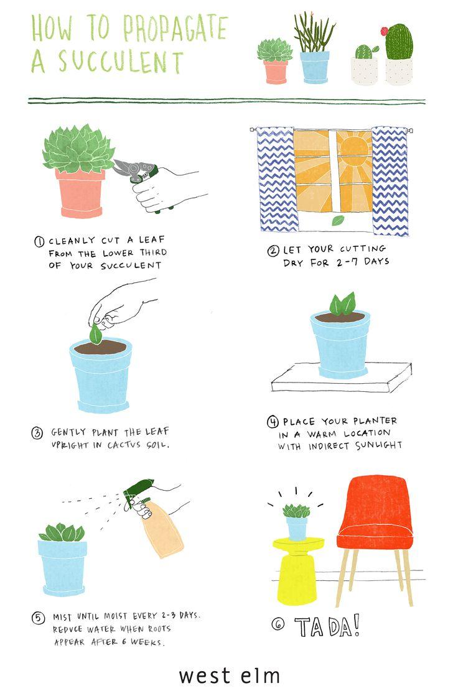 1000+ ideas about Propagate Succulents on Pinterest.