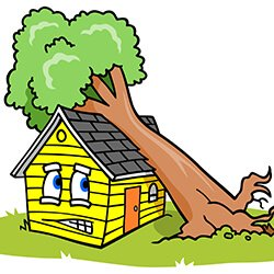 Your Questions About Trees & Property Insurance Answered.