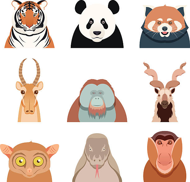 Prosimian Clip Art, Vector Images & Illustrations.