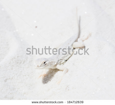 Protective Mimicry Stock Photos, Images, & Pictures.