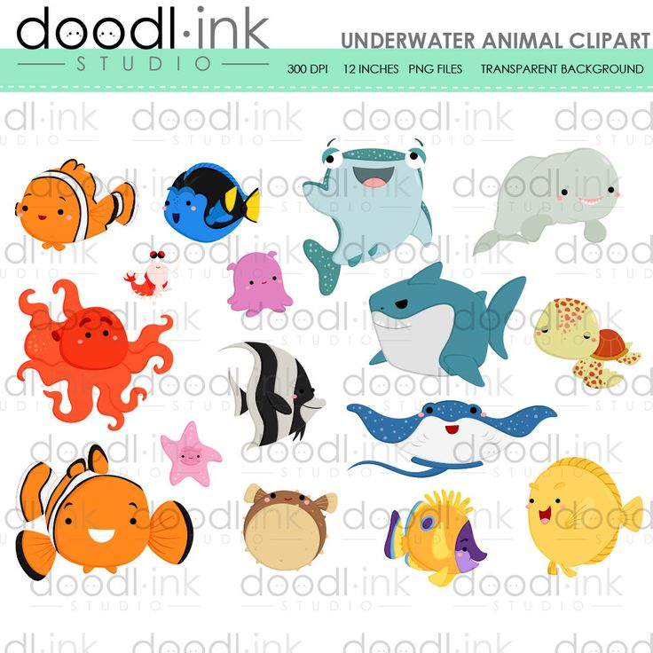 1000+ ideas about Underwater Animals on Pinterest.