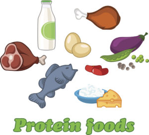Protein Food Clipart.