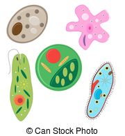 Protista Illustrations and Clip Art. 57 Protista royalty free.
