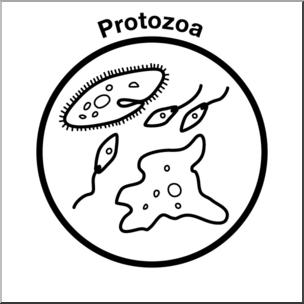 Clip Art: Soil Ecology Icons: Protozoa B&W I abcteach.com.