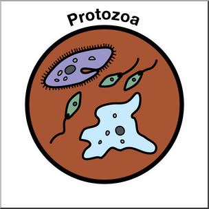 Clip Art: Soil Ecology Icons: Protozoa Color I abcteach.com.