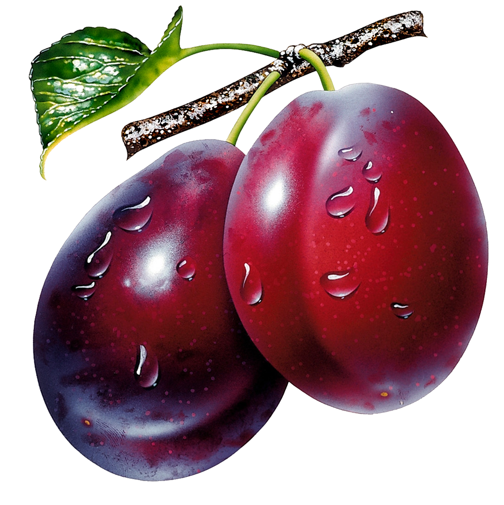Prunes_Clipart_Picture.png?m=1399672800.
