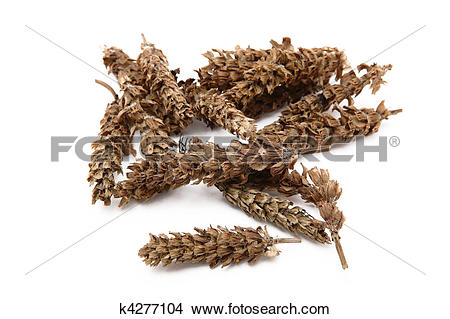 Stock Photo of chinese herb, prunella vulgaris k4277104.